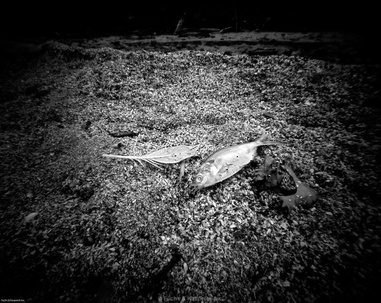 A feather and fish lie on the beach at the Huntington Reservation of the Cleveland Metroparks.