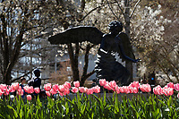 Tulips with Angel sculpture at the Chapel of Memories.<br />  (photo by Megan Bean / &copy; Mississippi State University)