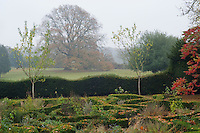 A spectacular tree in its autumn colours dominates the park beyond the scalloped hedge surrounding what was once the formal garden