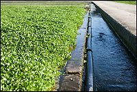 BNPS.co.uk (01202 558833)<br /> Pic: TheWatercressCompany/BNPS<br /> <br /> Watercress has been identified as the natural remedy to the alarming drop in sperm counts among men.<br /> <br /> Earlier this week researchers revealed that stress was to blame for the fact that sperm cells have halved in western men in the last 40 years.<br /> <br /> But now scientists are urging men to eat more watercress as the superfood has been shown to reduce stress levels.<br /> <br /> Tests have found that the green salad dampens the body's response to pressure and tension and thus helps to maintain the sperm count in men.
