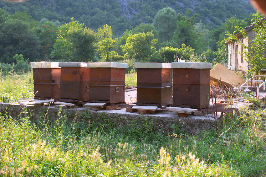 Bee hives beehives in the garden. Durovic Jovo Winery, Dupilo village, wine region south of Podgorica. Vukovici Durovic Jovo Winery near Dupilo. Montenegro, Balkan, Europe.