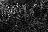 Nunhead cemetery, south London 7-2-16