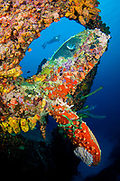 A diver swims behind the prop, on the wreck of the Hilma Hooker, a 236 foot long cargo vessel that sunk in 1984 off the island of Bonaire in the Caribbean.