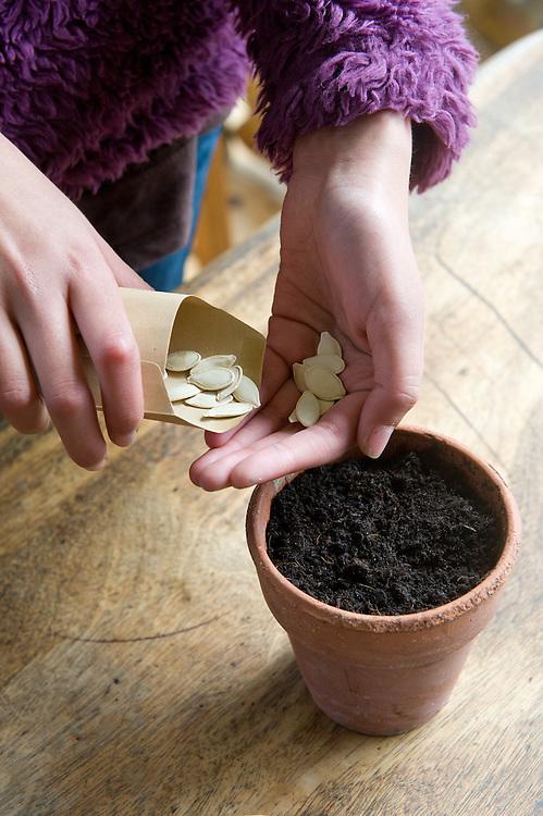 Planting pumpkin/squash seeds