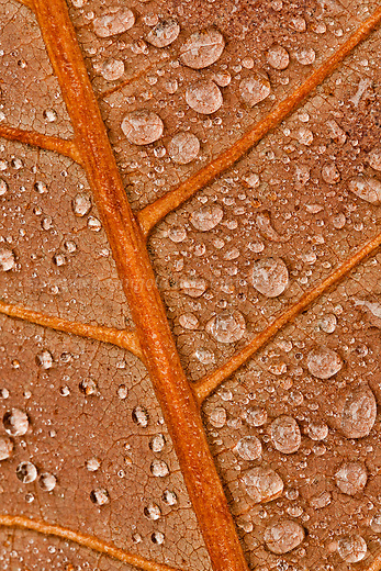 Dewdrops and leaf veins.