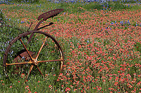 Antique tractor stands amid a field of red wildflowers