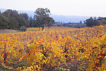 Jack London SHP, vineyard in autumn, SC55<br />