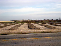 Quilt-work imagery of harvest fields near Villeneuve AB in the fall.