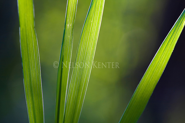 Grass blades lit by sunlight