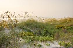 Soft sunrise light on the dunes of northeast Florida's many beaches.
