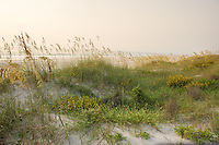 Soft sunrise light on the dunes of northeast Florida's many beaches.