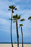 Palm trees at Venice Beach in Los Angeles, CA