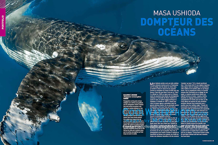 Plongée Magazine, December 2013, Photographer Portfolio, France, Image ID: Humpback-Whale-0201