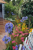 Beautiful perennial border, Agapanthus, Achillea, Coreopsis, white fence, shed at rear