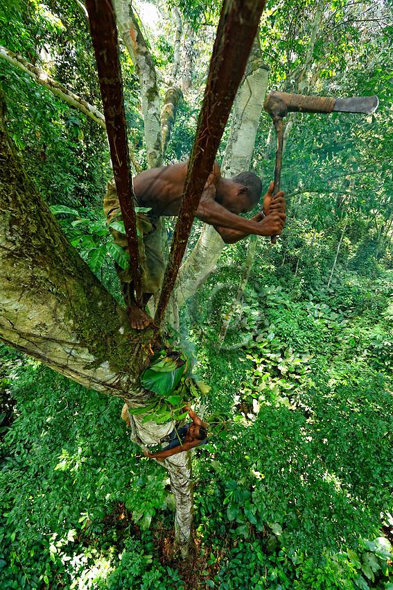 Balancing on a branch 40 metres above the ground, the honey-hunter opens a wild bees' nest with the axe called a Djombi to appropriate the honey. His only protection against the bees' fury is the smoker, which is made with a bundle of sticks stuffed into leaves.///En équilibre sur une branche à 40 mètres du sol, le chasseur ouvre à la hâche nommée Djombi, le nid sauvage des abeilles pour s'approprier le miel. Sa seule protection contre la furie des abeilles est l'enfumoir qui est fabriqué avec un fagot enserré dans des feuilles.