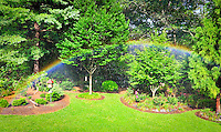 Rainbow in the garden