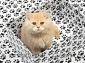Xavier, ANIMALS, cats, photos, SPCHCATS705,#A# Katzen, gatos