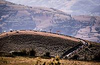 1.5km to go<br /> <br /> Stage 15: Tineo to Santuario del Acebo (154km)<br /> La Vuelta 2019<br /> <br /> ©kramon