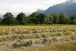 Heuernte, Hay harvest, Vaduz, Fürstentum Liechtenstein, Principality of Liechtenstein