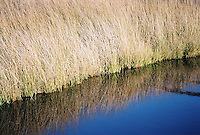 Photo of Marsh near Pawleys Island, South Carolina
