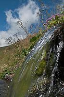 Europe/France/Midi-Pyrénées/65/Hautes-Pyrénées/Env Loudervielle: Paturages du Col de Peyresourde vers la Vallée du Louron