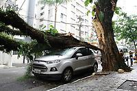 05.06.2019 - Queda de árvore na rua Afonso de Freitas em SP