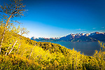 Overlook of Turnagain Arm of Cook Inlet under blue sky, surrounded by fresh green woods. Chugach State Park, Southcentral Alaska, Summer.