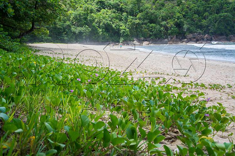 Vegetação de restinga na Praia do Sono, Paraty - RJ, 01/2016.