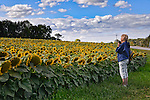 Taking photos of sunflowers- Yellow Springs