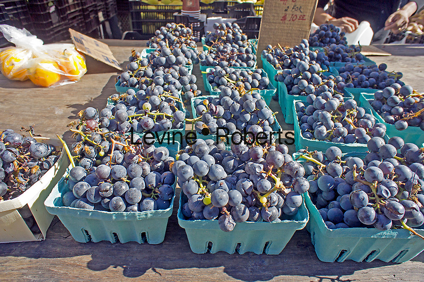 Concord grapes at the Union Square Greenmarket in New York on Saturday, October 13, 2012.   (© Richard B. Levine)
