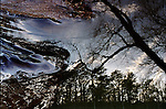 Reflections of trees in flowing water