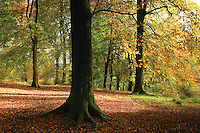 The Orry in Autumn, Eaglesham, East Renfrewshire<br /> <br /> Copyright www.scottishhorizons.co.uk/Keith Fergus 2011 All Rights Reserved