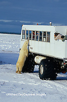 01874-06017 Polar Bear (Ursus maritimus) & Tundra Buggy   Churchill  MB
