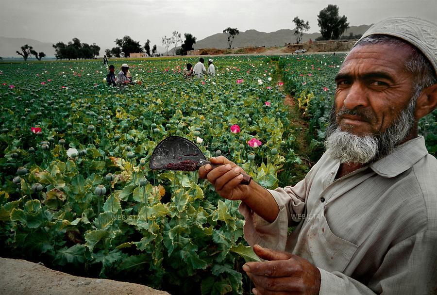 2004. A farmer in his field shows his harvest on his knife around Jalalabad. Un cultivateur dans son champ à la périphérie de Jalalabad tend sa récolte d'opium sur son couteau.