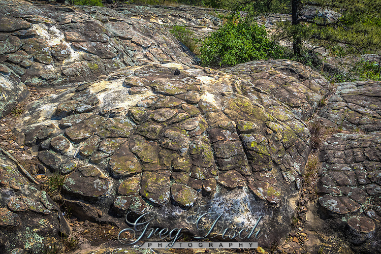 Turtle Rocks are some of the most unique in Petit Jean State Park near Morrilton Arkansas.<br /> <br /> Mounded polygonal structures <br /> resembling a turtle shell were carved in <br /> thick sandstones of the Hartshorne <br /> Sandstone.