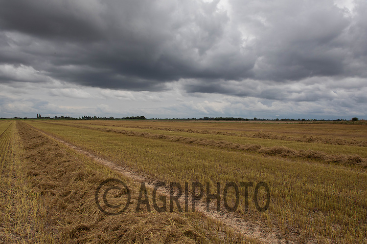 25.7.2020 Linseed straw<br /> ©Tim Scrivener Photographer 07850 303986<br />      ....Covering Agriculture In The UK.