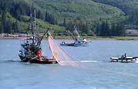 Prince William Sound, Alaska, salmon opening outside the Solomon Gulch Hatchery outside Valdez, Alaska during the summer of the Exxon Valdez oil spill.