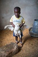 Dodoma, poultry/livestock