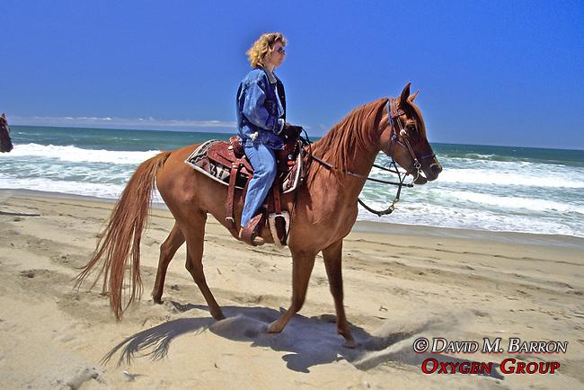 Evelyn Hanggi Riding Horse On Beach