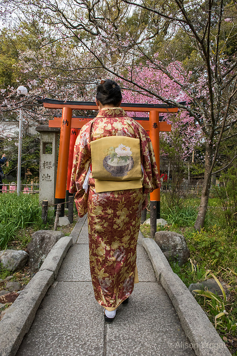 Japan, Kyoto, Hirano Shrine. Woman walking through Shinto shrine and garden with cherry blossoms. MR