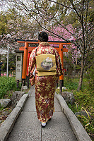 Japan, Kyoto, Hirano Shrine. Woman walking through Shinto shrine and garden with cherry blossoms. MR