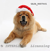Kim, CHRISTMAS ANIMALS, photos, GBJBWP27441,#XA# stickers