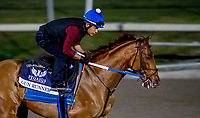 HALLANDALE BEACH, FL - JANUARY 26: Gun Runner exercises in preparation for the Pegasus World Cup Invitational at Gulfstream Park Race Track on January 26, 2018 in Hallandale Beach, Florida. (Photo by Scott Serio/Eclipse Sportswire/Getty Images)