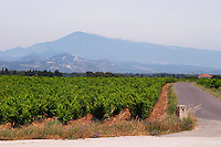 vineyard mont ventoux le cellier des princes chateauneuf du pape rhone france