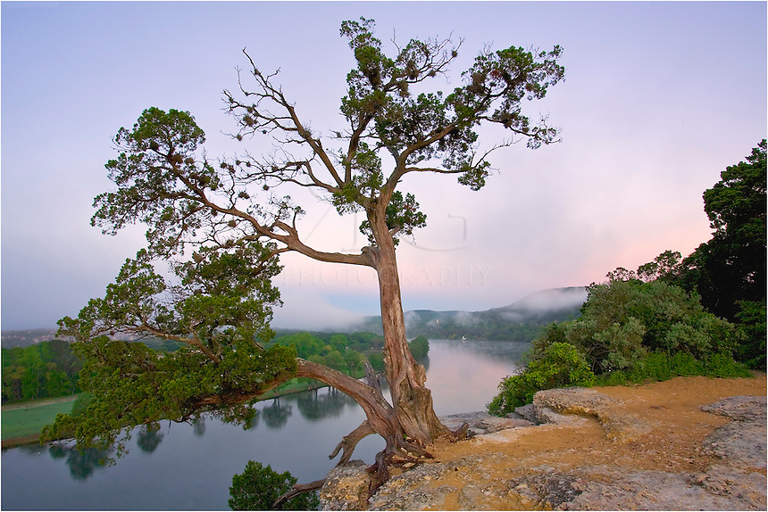 If you've been up on the cliff overlooking Pennybacker Bridge, you have seen this tree as it hangs precariously on the edge overlooking the Austin Bridge and the city of Austin in the distance.