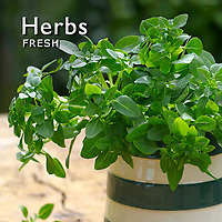 Herbs Pictures & fresh herbs photos. Fotos, images & photography