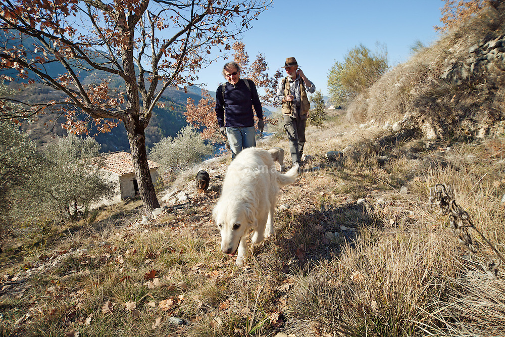 Jean Claude Authier and Max George take their dogs hunting for truffles in the hills near Puget-Theniers, France, 09 February 2011. The general conditions in which truffles can grow are known, but truffle production is still far from being an exact science. Truffles are found in association with trees, mainly oaks: they grow underground, around the perimeter of a tree's root system. But even if the soil conditions, climate, vegetation and rainfall are ideal, a tree may host only one or two truffles. Or lots. Or none at all.