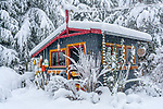 Vashon Washington:<br /> Winter, snow covered garden shed and trees