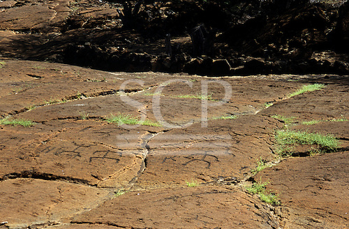Big Island, Hawaii. Large, flat rock at Puako Petroglyph Park with ancient Hawaiian petroglyphs carved into it.