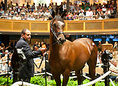 2013 Fasig Tipton Saratoga Select Yearling Sales - Archive - COMPLETE